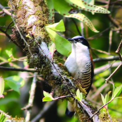 Bhutan_far_east_birding_19days